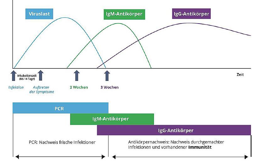 Covid-19 Antikörpertestung